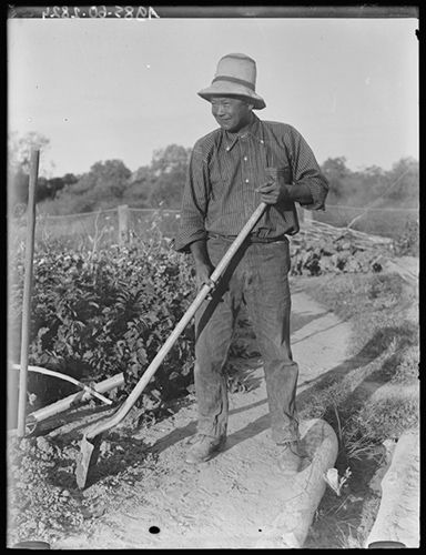 A Chinese gardener working in a garden, Durham Downs station, Queensland 1919. He is dressed in sturdy trousers and a shirt with its long sleeves rolled up. He wears a light coloured hat with two dark bands around the upper part. He holds a shovel diagonally across his body. The shovel head rests upside down in a shallow hole. Behind him are garden plants and the garden fence. (photograph by Herbert Basedow)