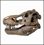 Tyrannosaurus Rex Dinosaur Skull Model - This large dinosaur skull model is over 14 inches long and is simply awesome! This incredible piece is highly detailed from polyresin and is the first in a new series of large 1/4 scale skulls.$219.00 in stock and ready to ship today! Shop www.DinosaurToysSuperstore.com