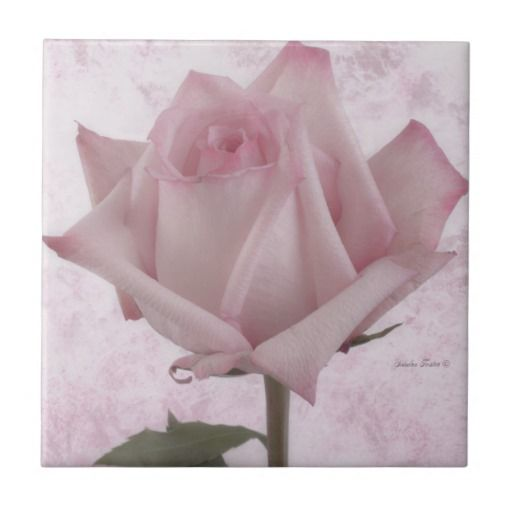 Soft Pink Rose Flower Small Square Tile