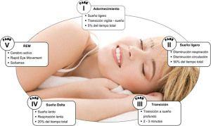 Ciclos del sueño