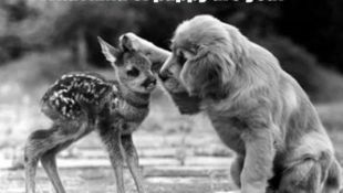 Other Animals Archives | Funny Animal Photo
