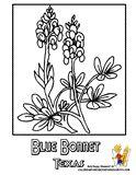 Bluebonnet Flower Coloring Page