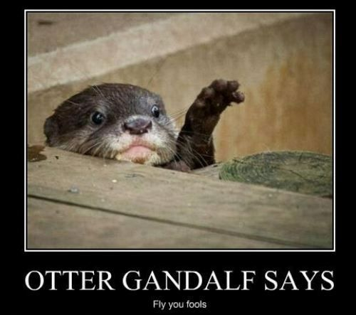 Otter Gandalf: Gandal Funny, Otters Gandalf, Awesome, Otters Sherlock, Fish, One Word, Hehe Prob Funnier, Hedgehogs, Animal