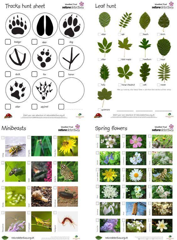 Nature Detective game - сайт с бесплатными листами для печати Nature Detectives.  С такими распечатанными заданиями можно отправиться на by sheila.bendle.3
