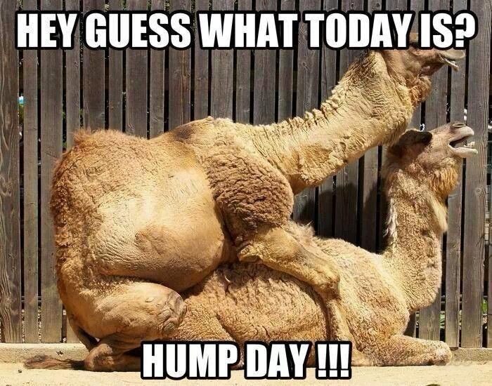 The 25+ best Wednesday hump day ideas on Pinterest | Hump ...