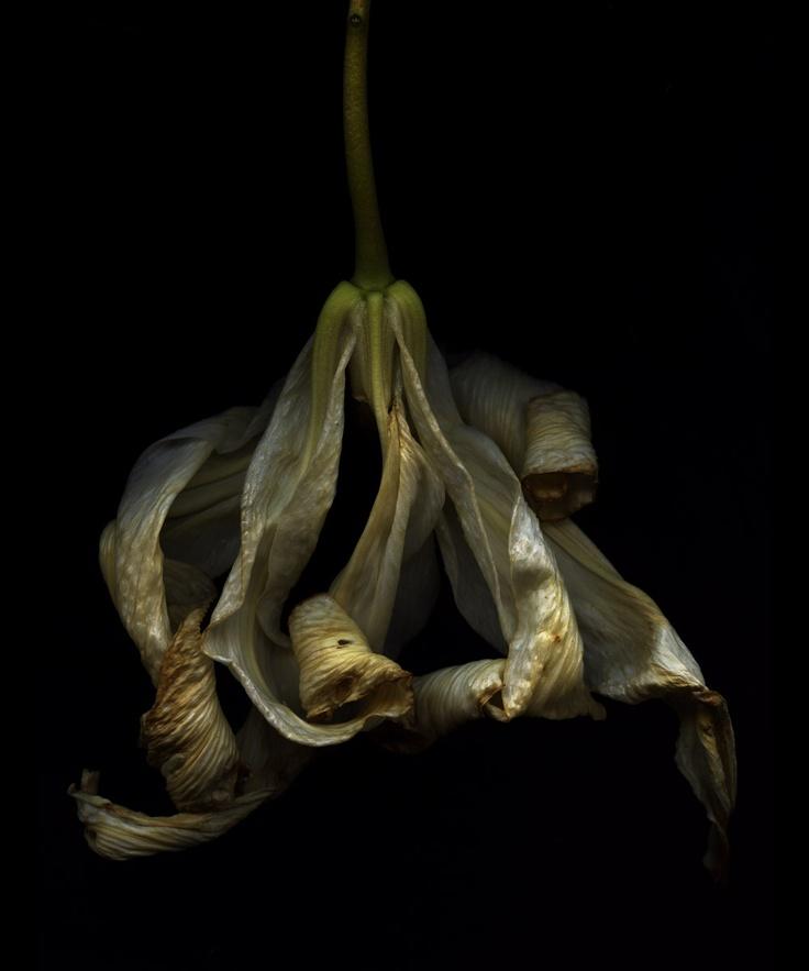 dead flower, slow shutter speed