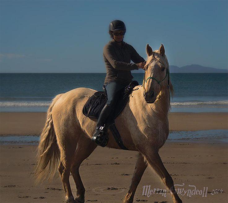 Finding Light #16  #art #photography #beach #horse