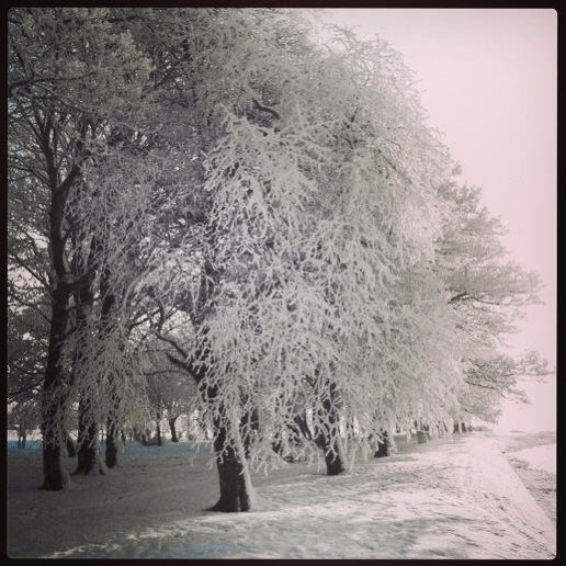 A winter wonderland! Burgess Park, Athlone, Co.Westmeath, Ireland.