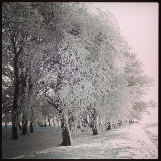 A winter wonderland! Burgess Park, Athlone, Co.Westmeath, Ireland.