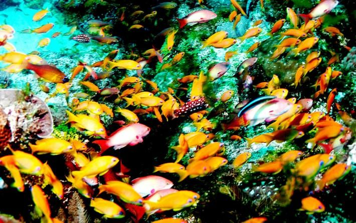 www.sunsafaris.com  #mozambique #quirimbasarchipelago #beachholiday #destination #honeymoon #islandparadise #romance #relax #ocean #scubadive #marinereserve #conservation #matemoisland #vamiziisland #dugong #endangeredspecies