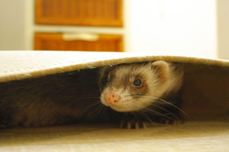 j'aime me cacher sous les tapis !