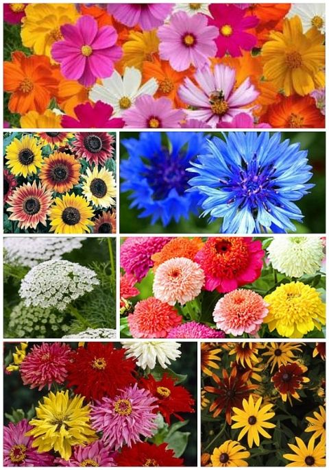 Best Flower to Plant for A Cut Flower Garden