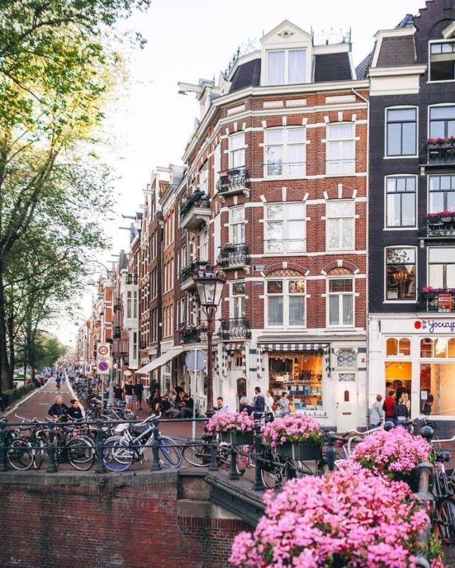 Fiori di primavera a Amsterdam, Paesi Bassi. #europe #travel #wanderlust #visit …
