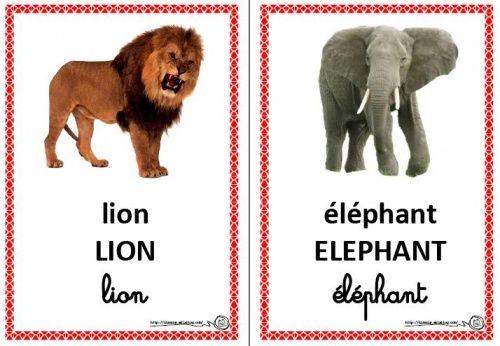 Imagier couleur des animaux du cirque