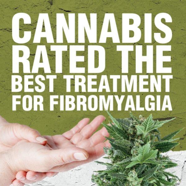 Le cannabis a été évalué meilleur traitement contre la fibromyalgie