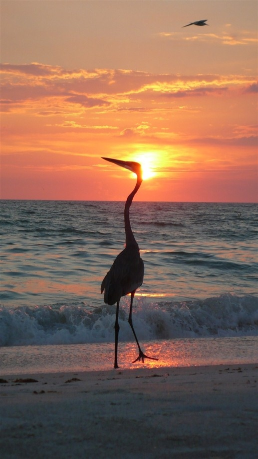 Harrington House Beachfront Bed & Breakfast - Holmes Beach, Florida. Holmes Beach Bed and Breakfast Inns
