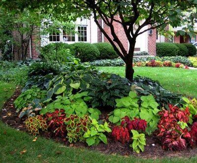 Colorful shade garden