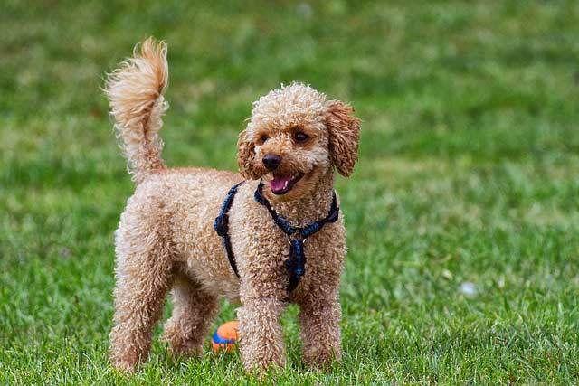 Bestapartmentdogs Apartmentdogs Bestdogs Dogbreeds