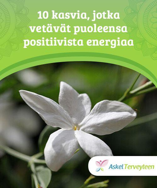 10 kasvia, jotka vetävät puoleensa positiivista energiaa  Kun aloe vera kasvaa, se houkuttelee hyvää onnea. Mutta jos se kuihtuu, se on imenyt huonoa energiaa, suojellen meitä.