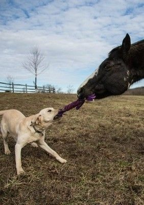 Dog playing with the bigger dog if you didn't know native Americans believe that the horse is just a big dog