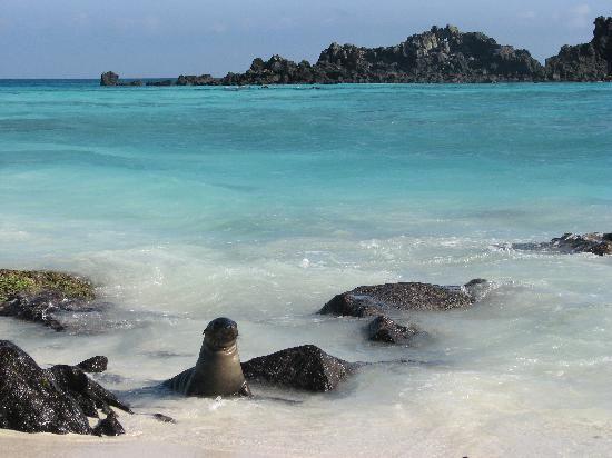 Destination réservée aux plongeurs expérimentés, l'archipel des Galápagos est un véritable sanctuaire de la vie marine. Les coraux sont exceptionnels. On trouve des variétés de poissons que l'on observe nulle part ailleurs. Les plus chanceux assisteront aux ballets des otaries ou au plongeon des iguanes.