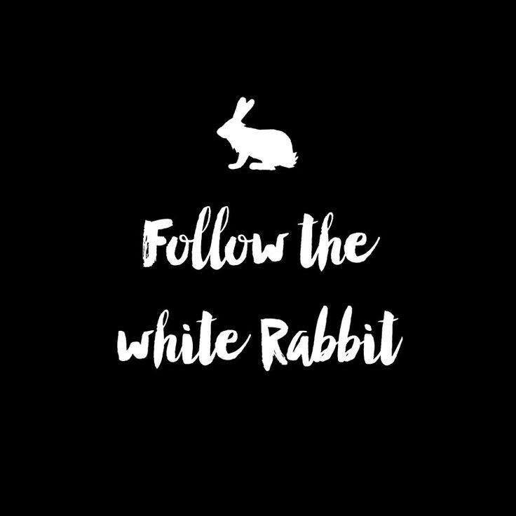 Follow the white rabbit                                                                                                                                                                                 More
