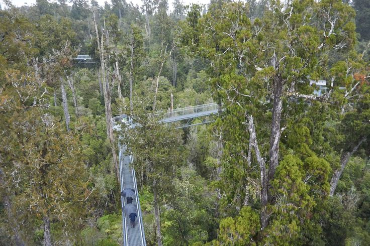 The West Coast Treetop Walkway near Hokitika