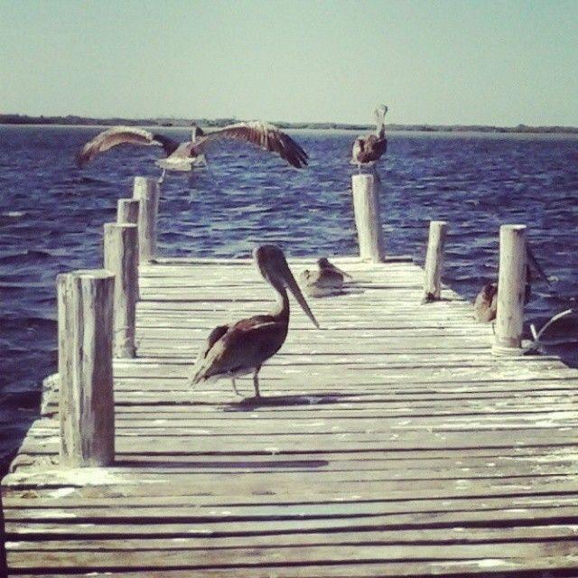 Pelikans at Dock in San Felipe, Yucatán, México.