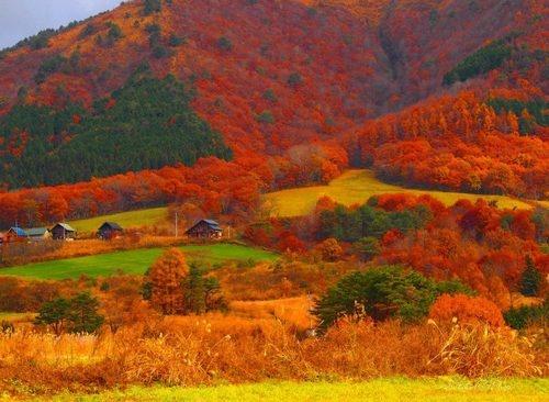 蒜山 紅葉
