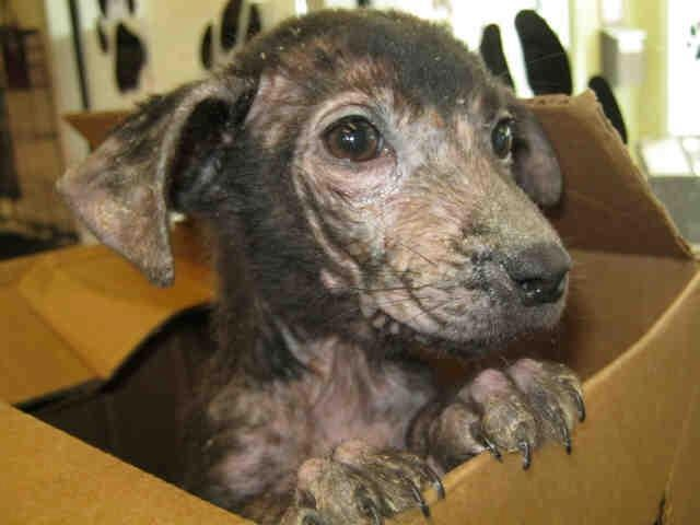 22 Best Images About Animals For Adoption In Texas On