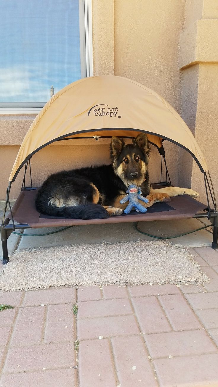 How cute is this pup and how cool is this bed?!