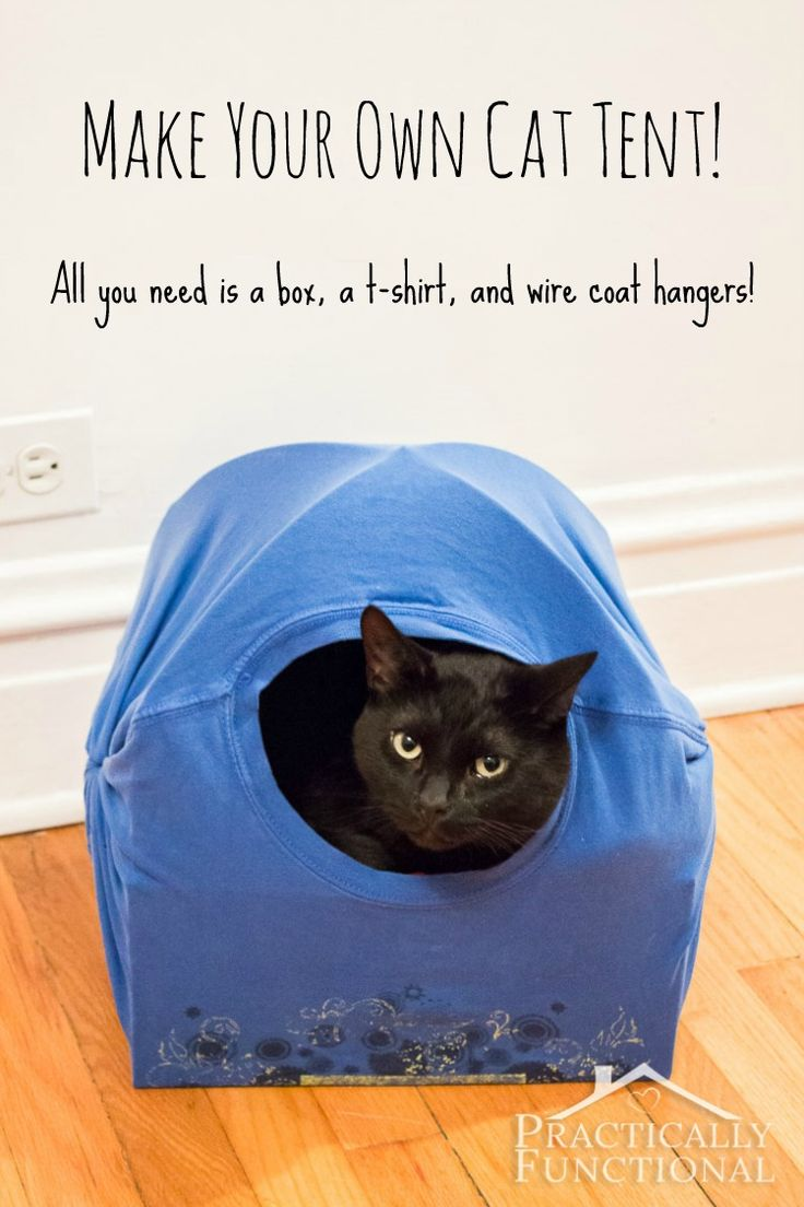 Turn an empty box into a DIY cat tent bed! All you need is a box, a t-shirt, and two wire coat hangers!