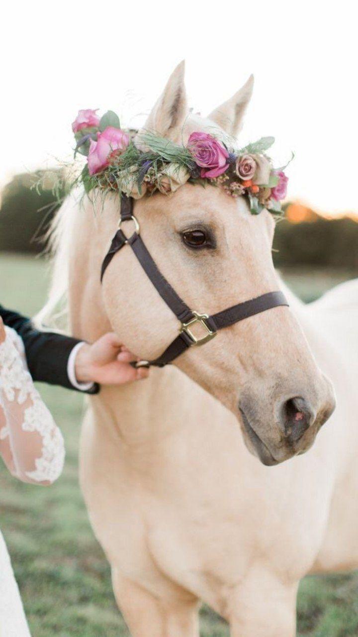 خلفيات بناتيه أجمل خلفيات موبايل للبنات 2021 جمعنا لكم في مجلة الحلوة أحدث وأجمل خلفيات للبنات 2021 في هذا الموضوع تجدون خلفيات جوال روعة Horses Animals Pets