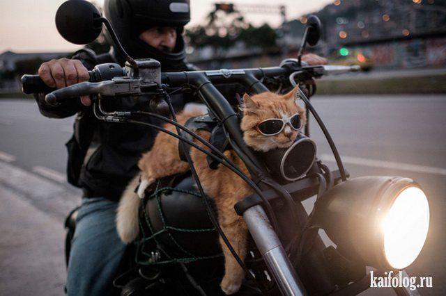 Прикольные котики (45 фото) | Смешные фото кошек, Смешное ...