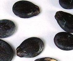 I semi di anguria possono diventare un ottimo integratore alimentare, poiché ricchi di sostanze benefiche per l'organismo.
