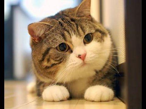 cat soup movie
