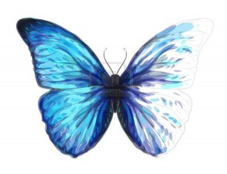 easy butterfly drawings to paint | Butterfly Morpho ...