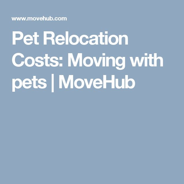 Pet Relocation Costs: Moving with pets | MoveHub