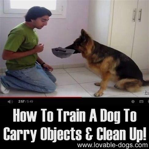 Beyond The Dog Training Kansas City Dog Training Music Free