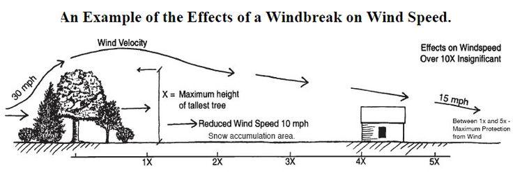 Old Windbreak Design A Single Row Of Trees Or Shrubs