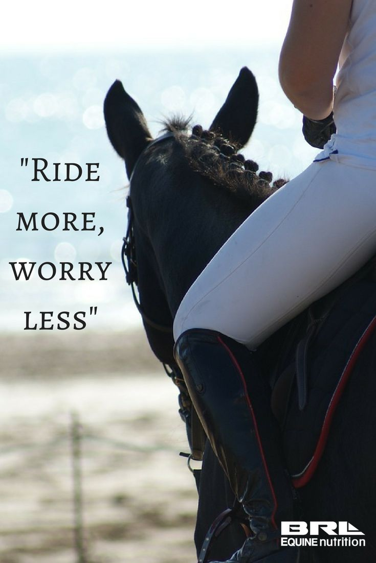 103 best horses, horse sayings images on pinterest | horse sayings