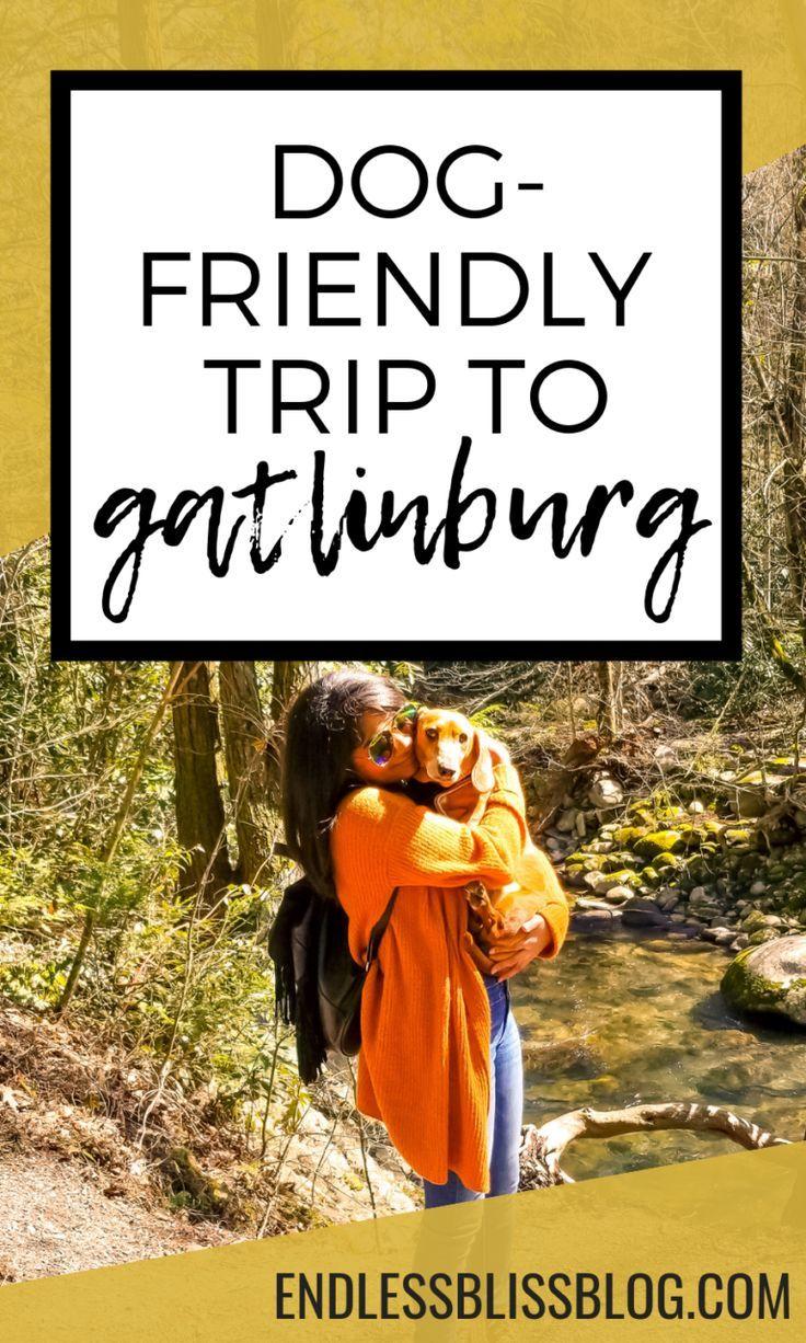 DogFriendly Trip to Gatlinburg, Tennessee in 2020 Dog