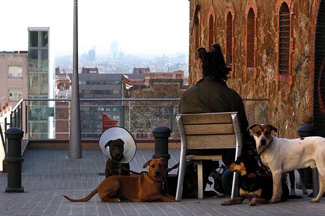Arnaud Chochon - Une vie de chien #chocurbain #concours #photo #contraste