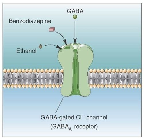 A GABA receptor agonist = drug  agonist for one or more of the GABA receptors. There are 3 receptors of the gamma-aminobutyric acid: GABA-α and GABA-ρ are ion channels that signal chloride + diminish action potentials. The GABA-β receptor belongs to the G-Protein coupled receptors that inhibit adenylyl cyclase , therefore leading to decreased cyclic adenosine monophosphate (cAMP). GABA-α and ρ receptors produce sedative, hypnotic and antiepileptic effects +β inhibits gene transcription.