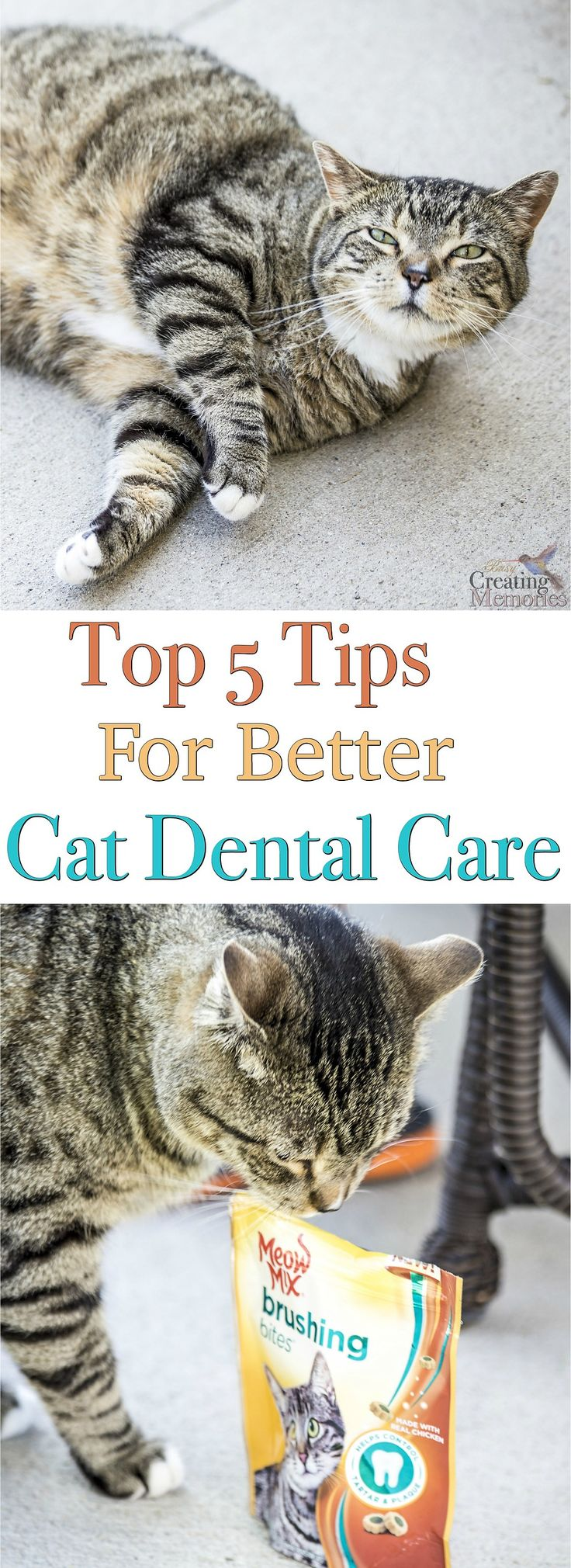 best cat care images on pinterest cat cat cute kittens and kittens