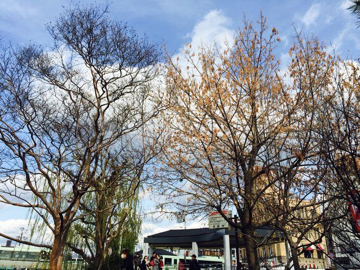 Winter leaves in Kyoto