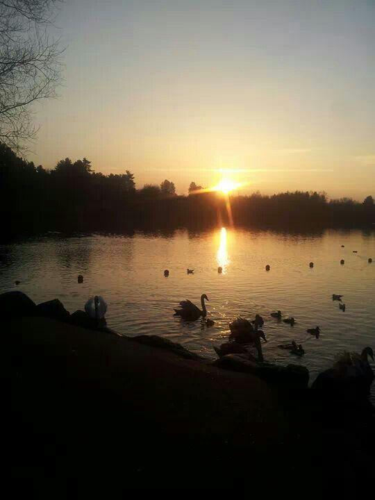 Centre parcs Sherwood Forest
