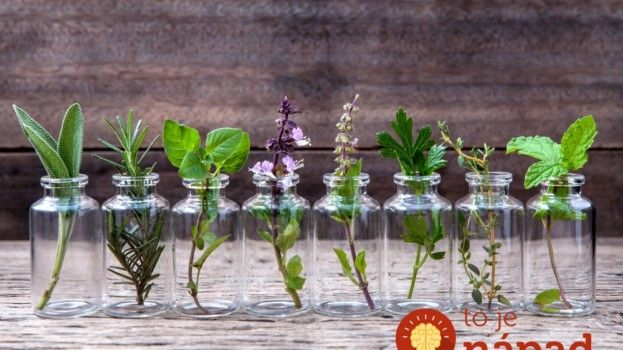 10 rastlín, ktoré môžete pestovať vo vode celý rok