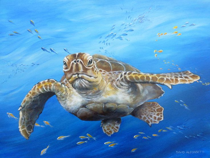 1000 images about watercolour under the sea on for Turtle fish paint