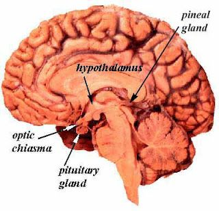 FOODS THAT FEED THE PINEAL GLAND